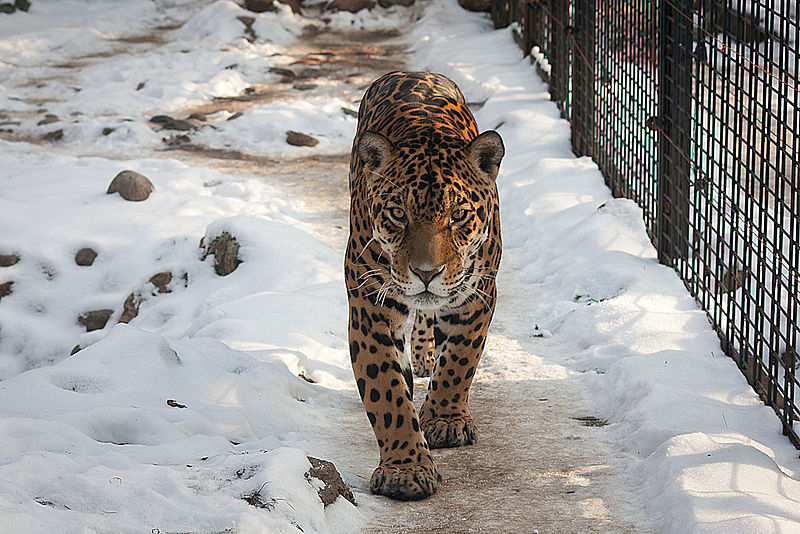 Visit the Warsaw ZOO in the winter